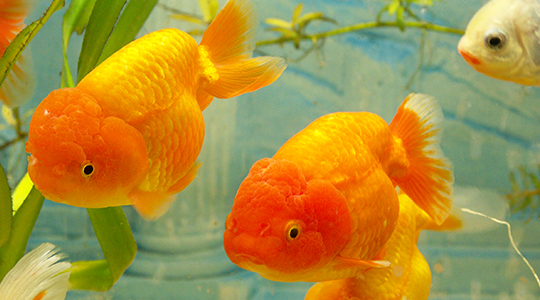 fish and aquarium suppliers in essex tisburys aquatics